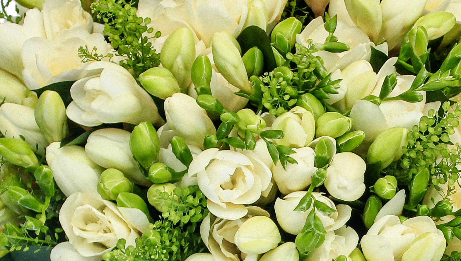fantastic-freesia-main.jpg