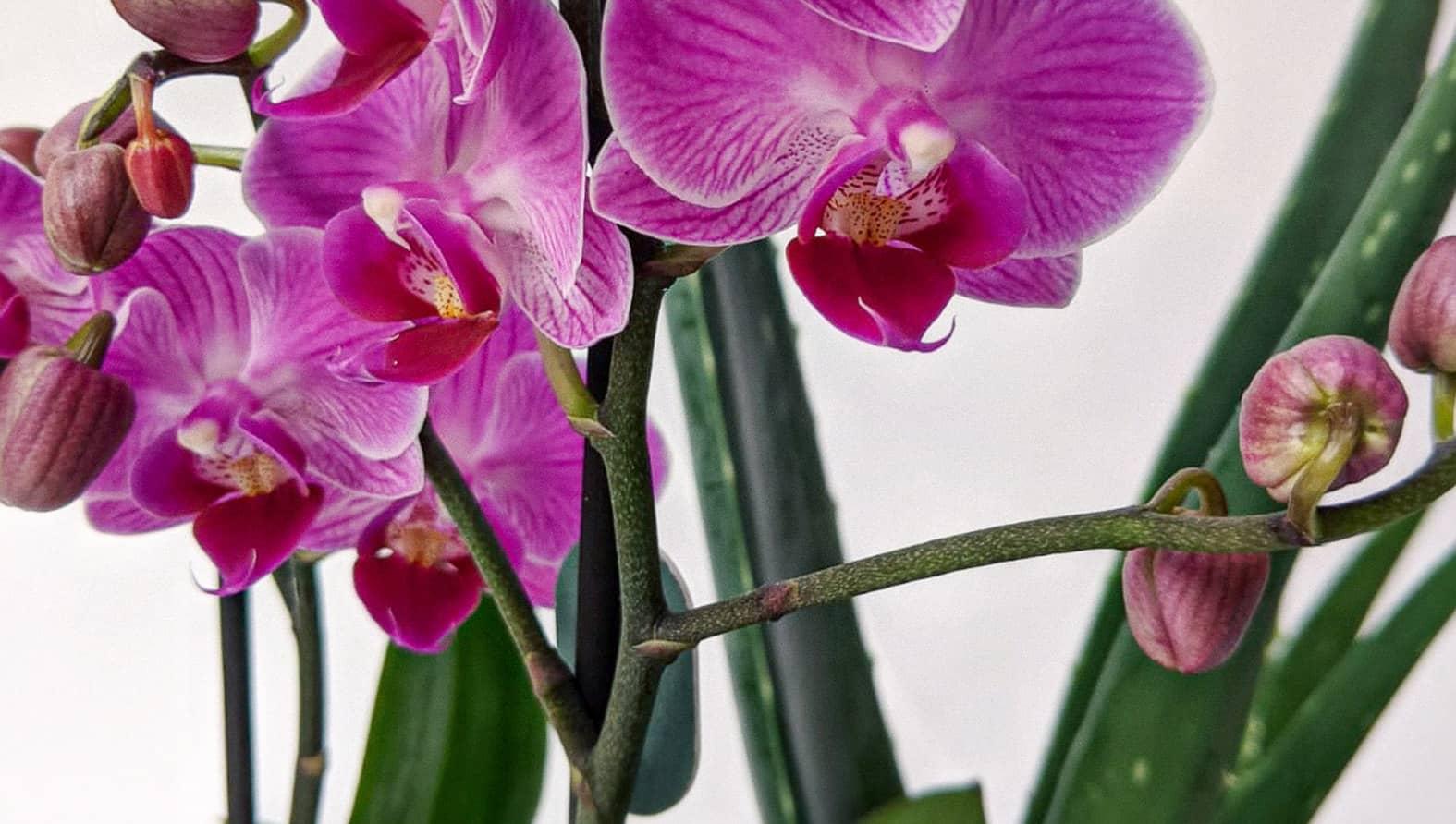 orchid-aloe-full.jpg