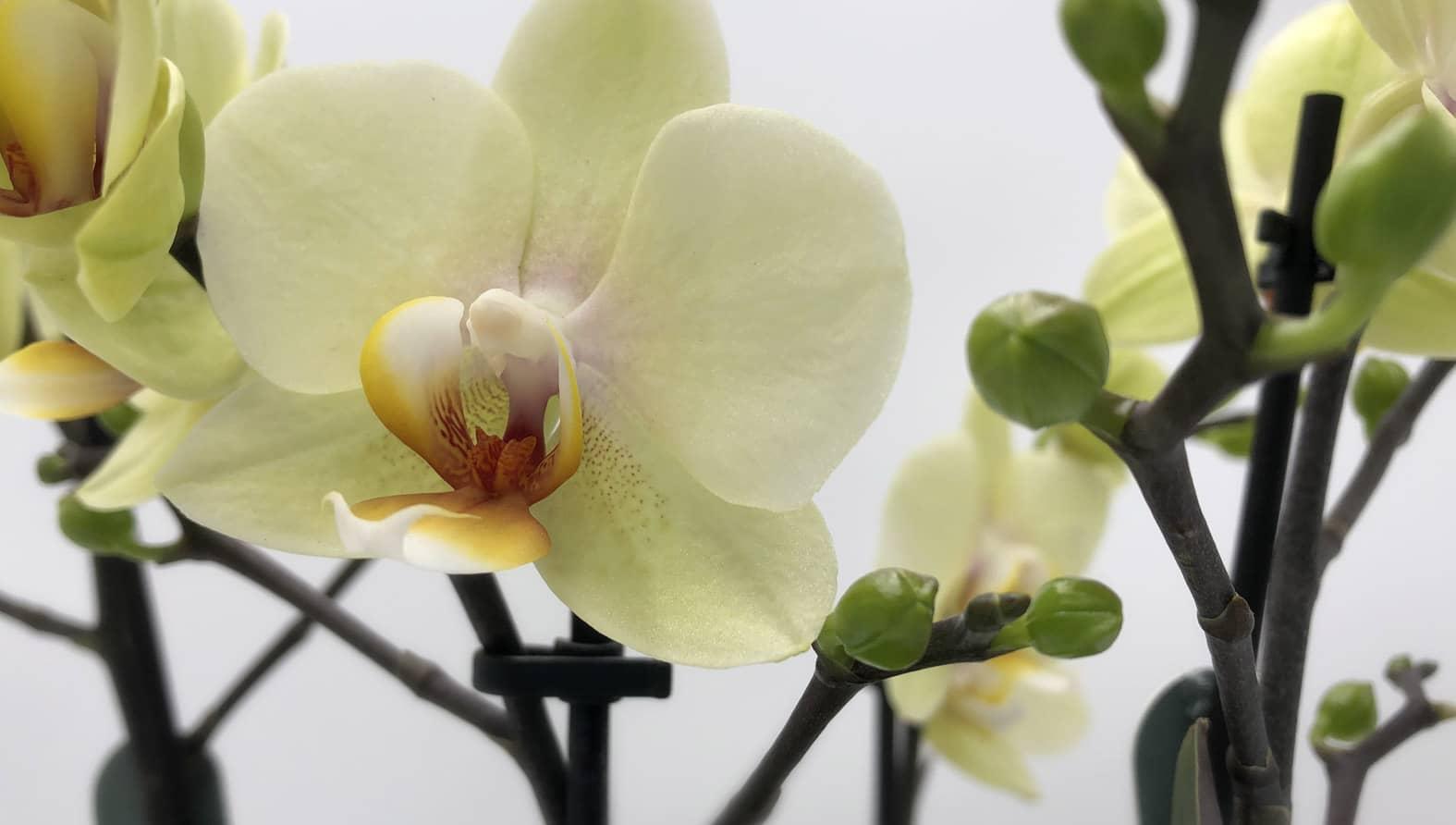 orchidea-web-full.jpg