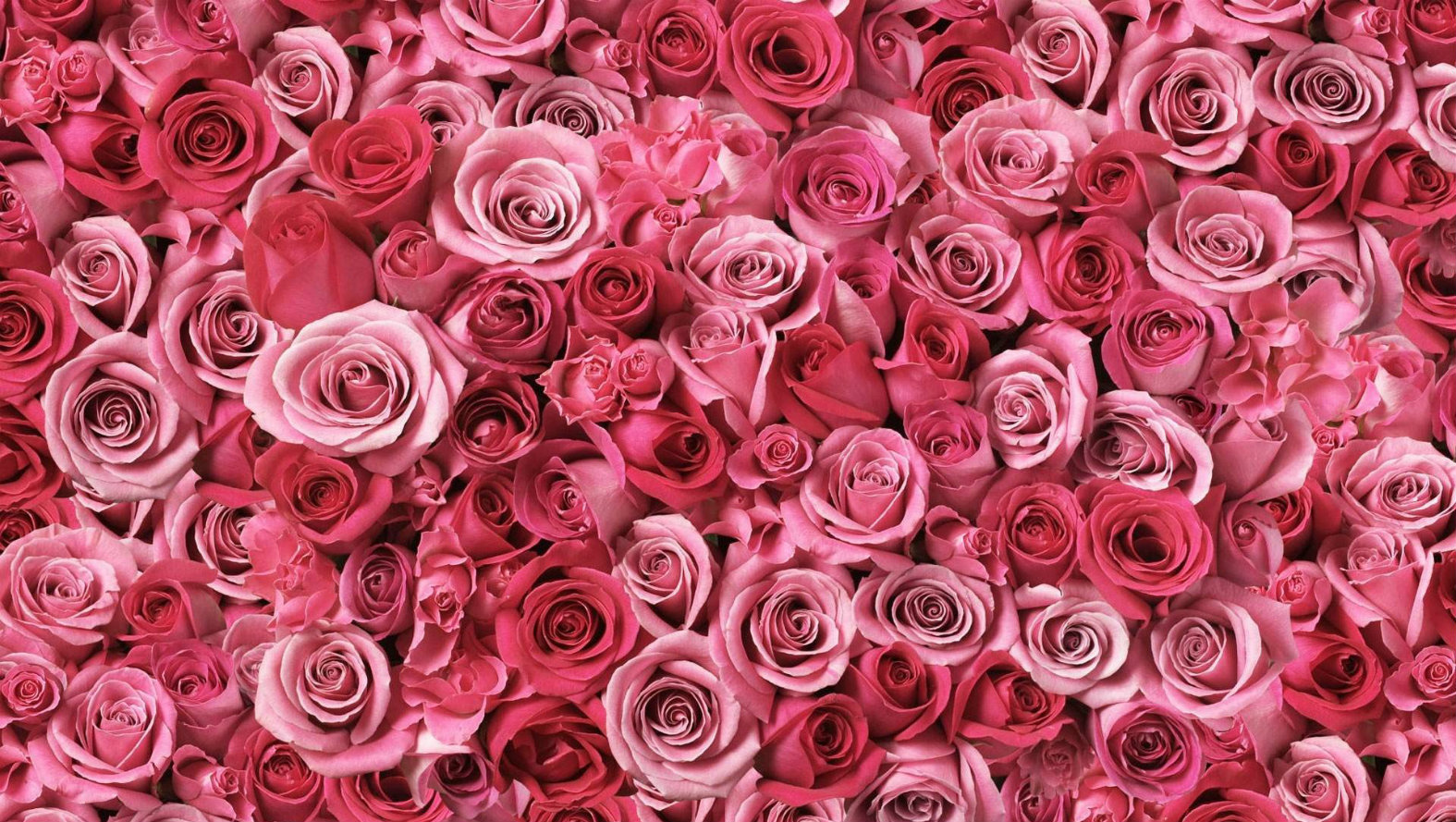 pink-and-roses.jpg