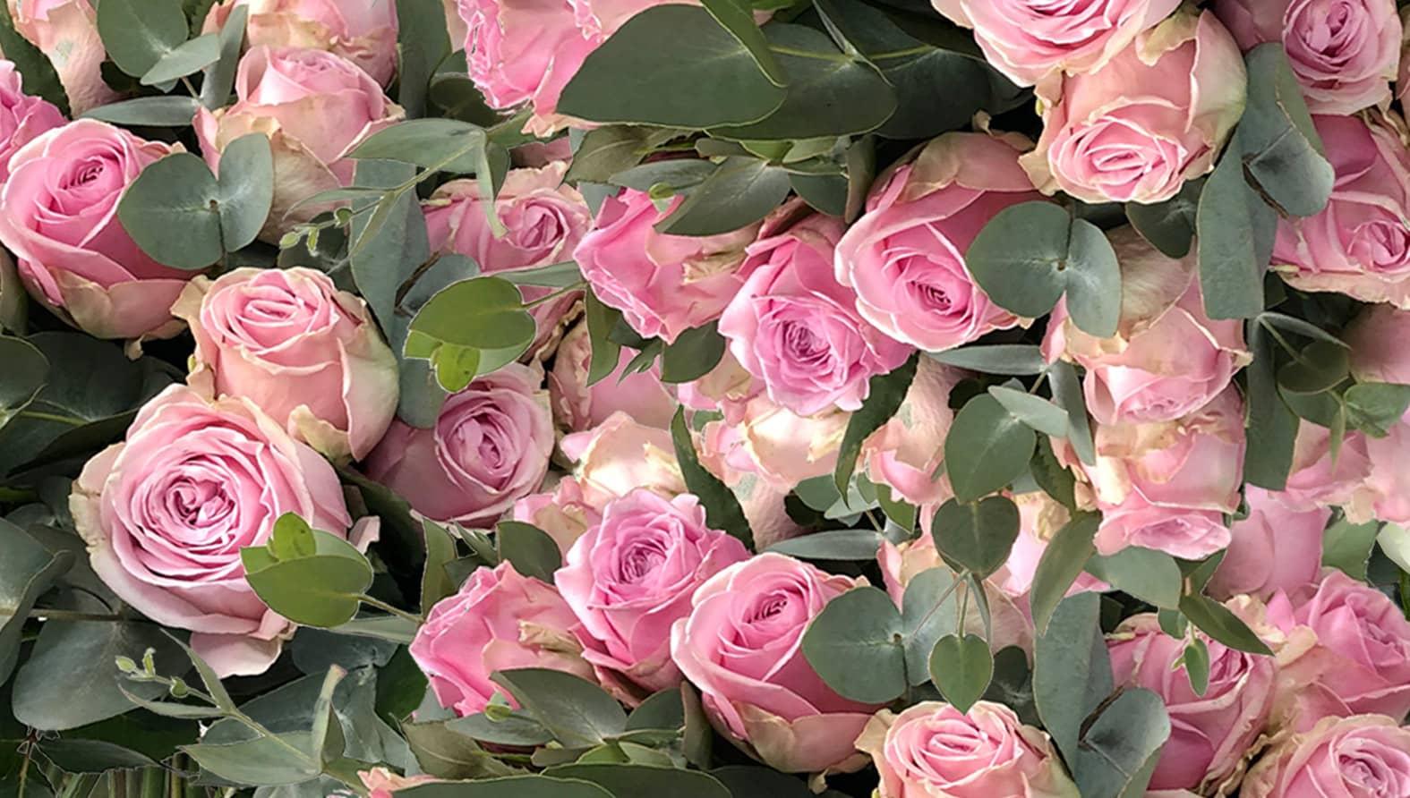 roses-delightfull-size-pink.jpg