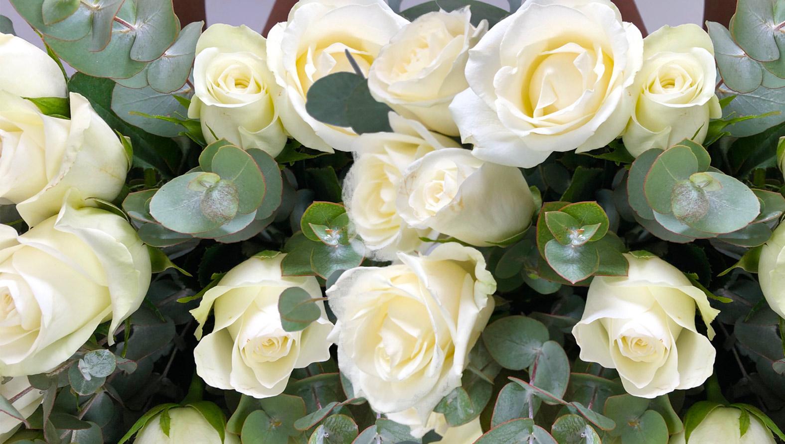 roses-delightfull-size.jpg