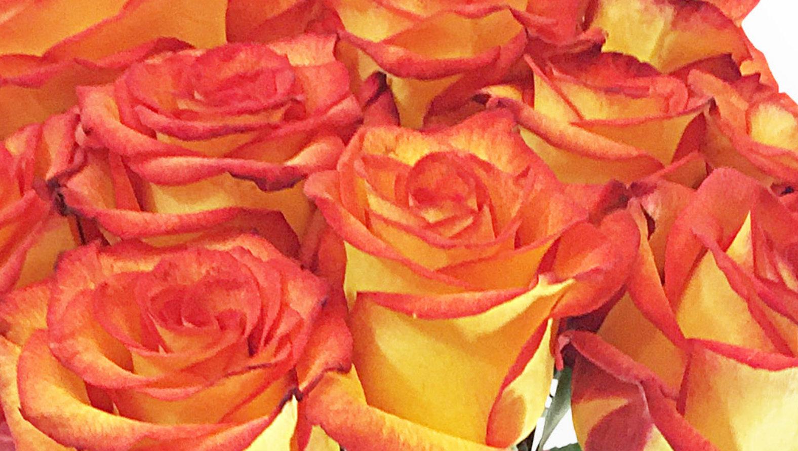 roses-orange.jpg