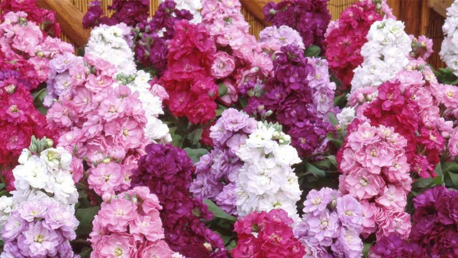 stock-flowers.jpg