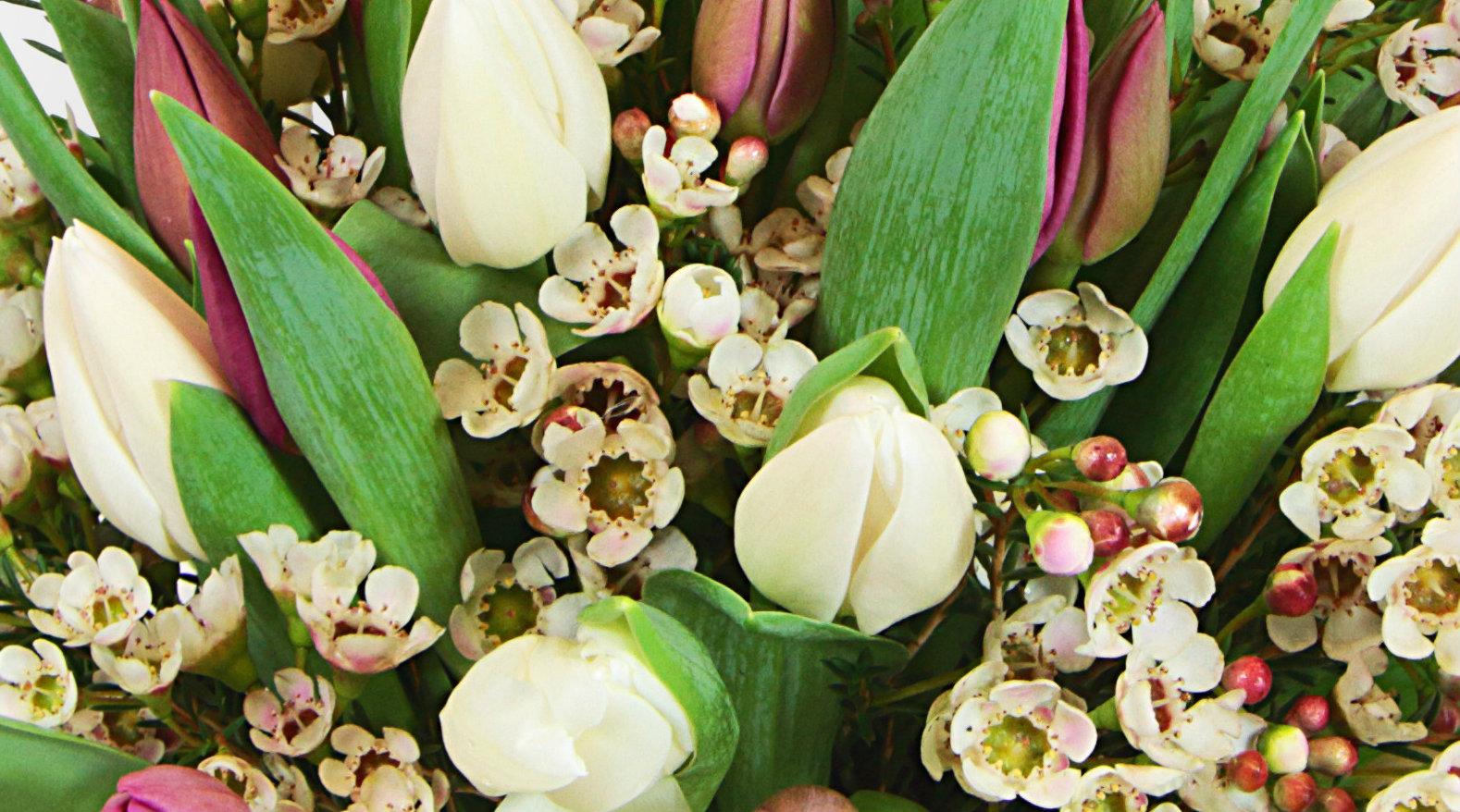 tulips-heaven-on-earth-zoom.jpg