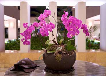 Hotel Orchids