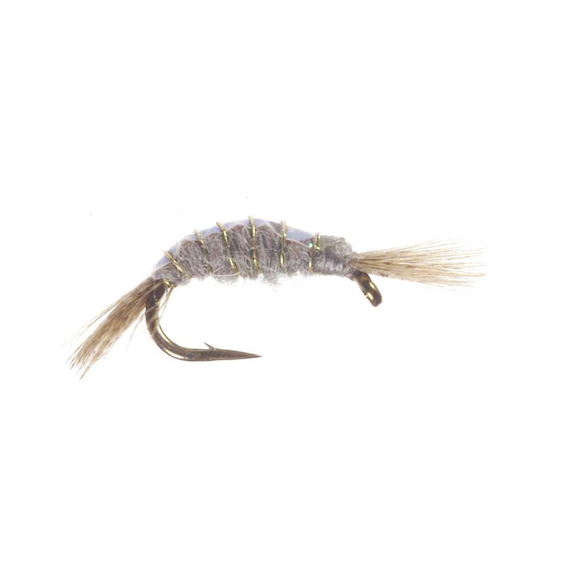 Shrimp Scud Gray