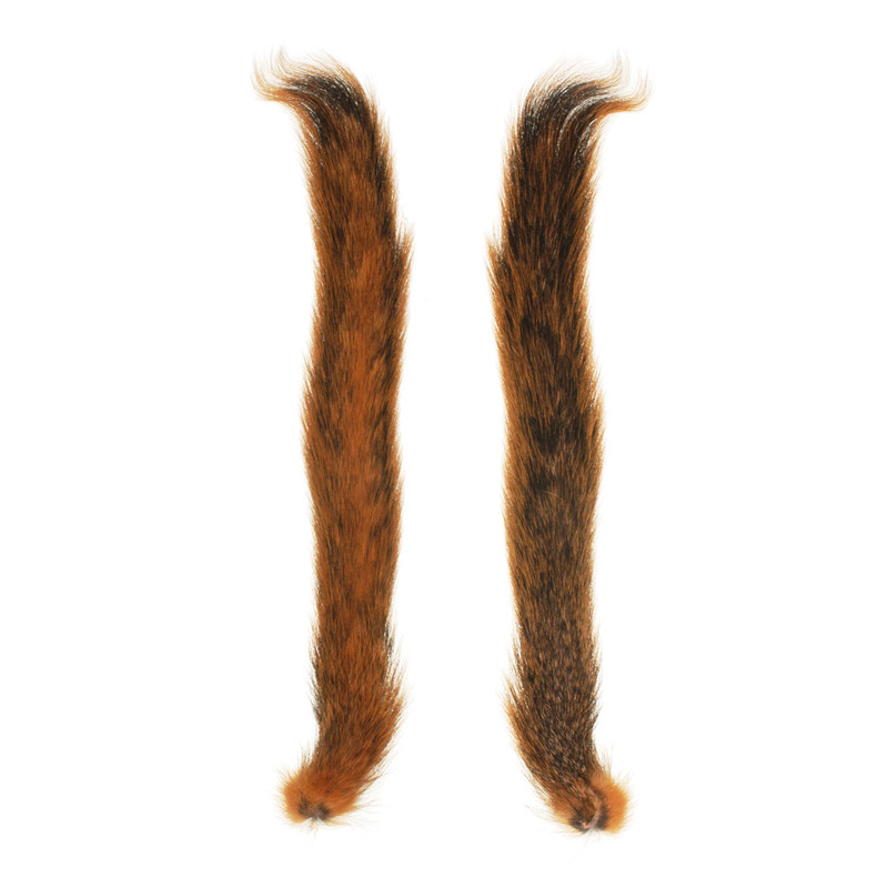 Top and Bottom View of Fox Squirrel Tails