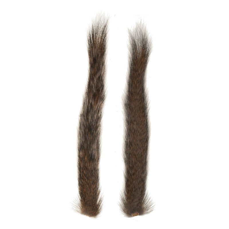 Top and Bottom View of a Gray Squirrel Tail