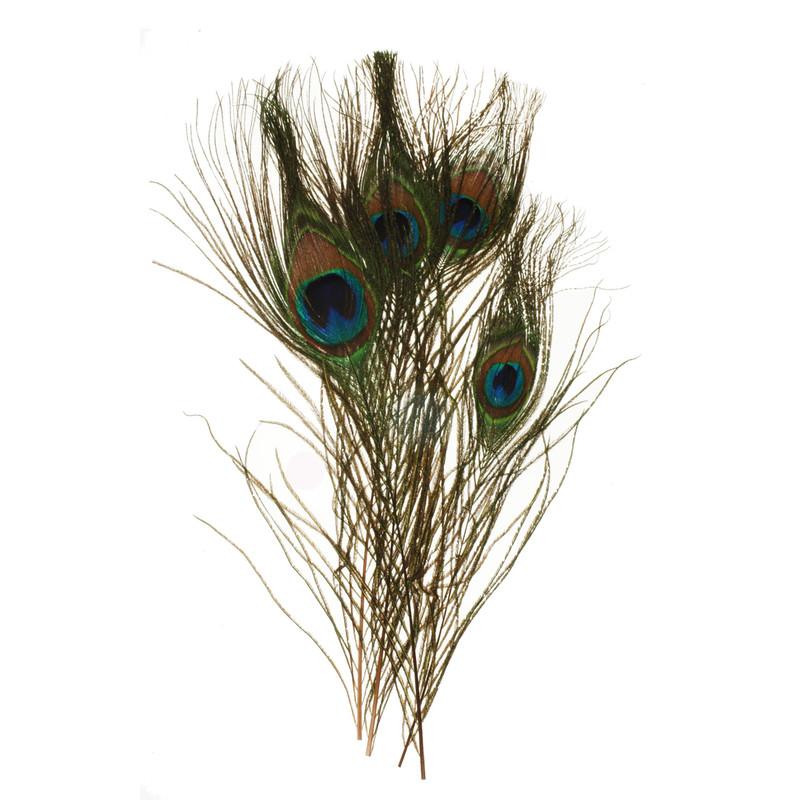 Four Peacock Eyes