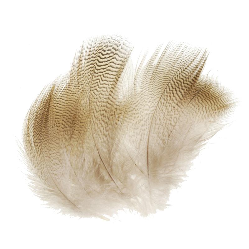 Twelve Wood Duck Lemon Barred Feathers