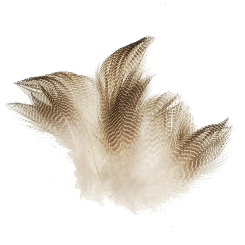 Twelve Gadwall Barred Flank Feathers