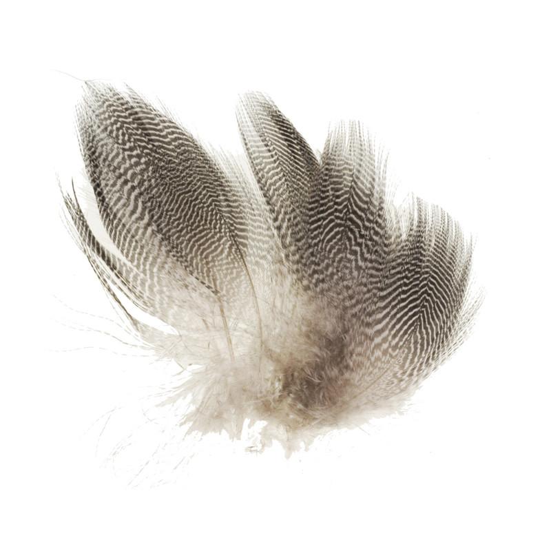 Twelve Teal Barred Flank Feathers