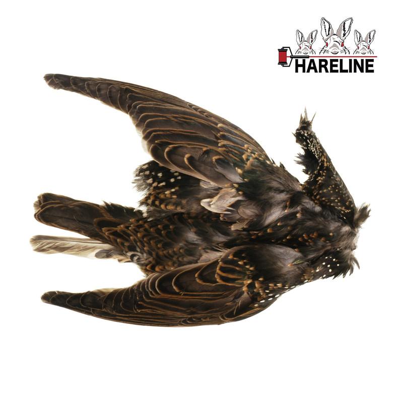 A Hareline Starling Skin