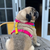 Mochi's Quarantini Bikini Dog Harness Back
