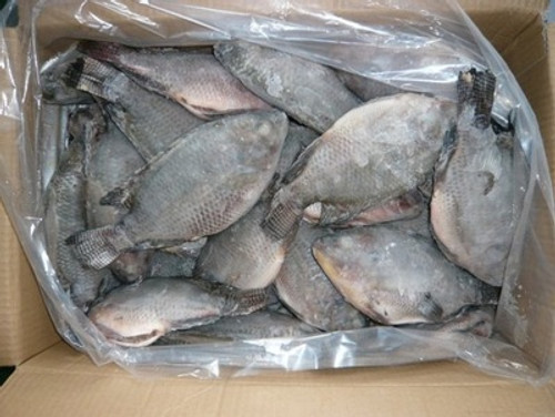 Picture of Tilapia