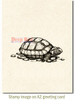 Tortoise Cling Stamp by Deep Red Stamps shown on A2 card