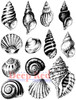 Seashell Collection Cling Stamp by Deep Red Stamps