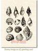 Seashell Collection Cling Stamp by Deep Red Stamps shown on A2 card