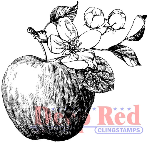 Apple Rubber Cling Stamp by Deep Red Stamps