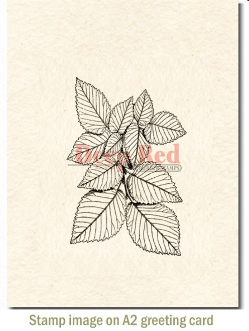 Foliage Rubber Cling Stamp by Deep Red Stamps shown on A2 card