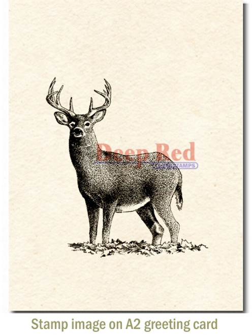 Buck Deer Rubber Cling Stamp by Deep Red Stamps shown on A2 card