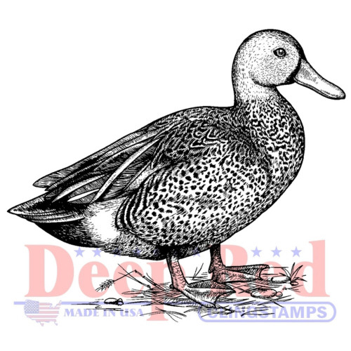 Gadwall Duck Rubber Cling Stamp by Deep Red Stamps