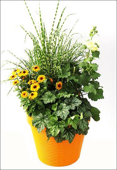 container-garden-001.jpg