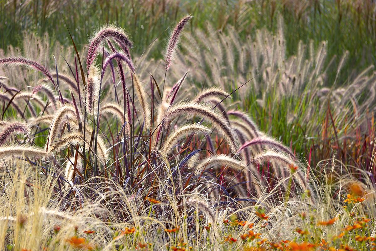ornamental-grass-gardening-ideas-4-.jpg