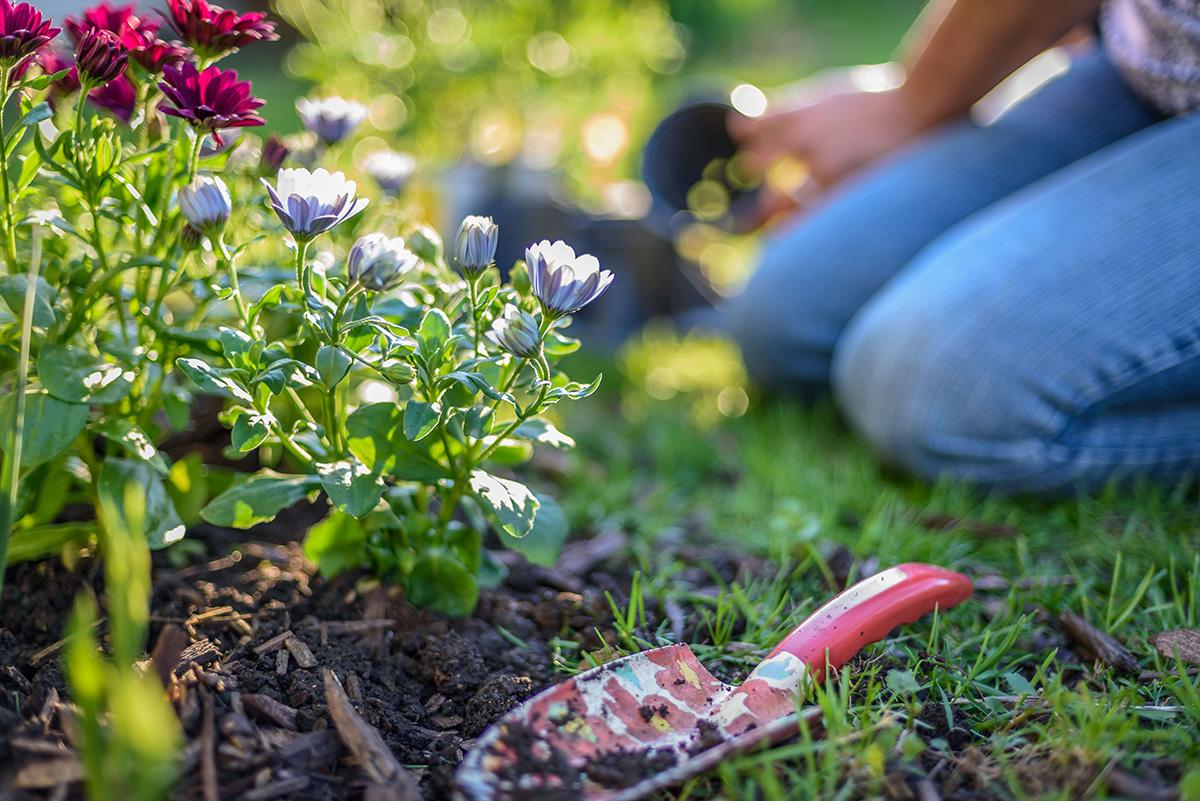 perennials-planting-001-ss-2021.jpg