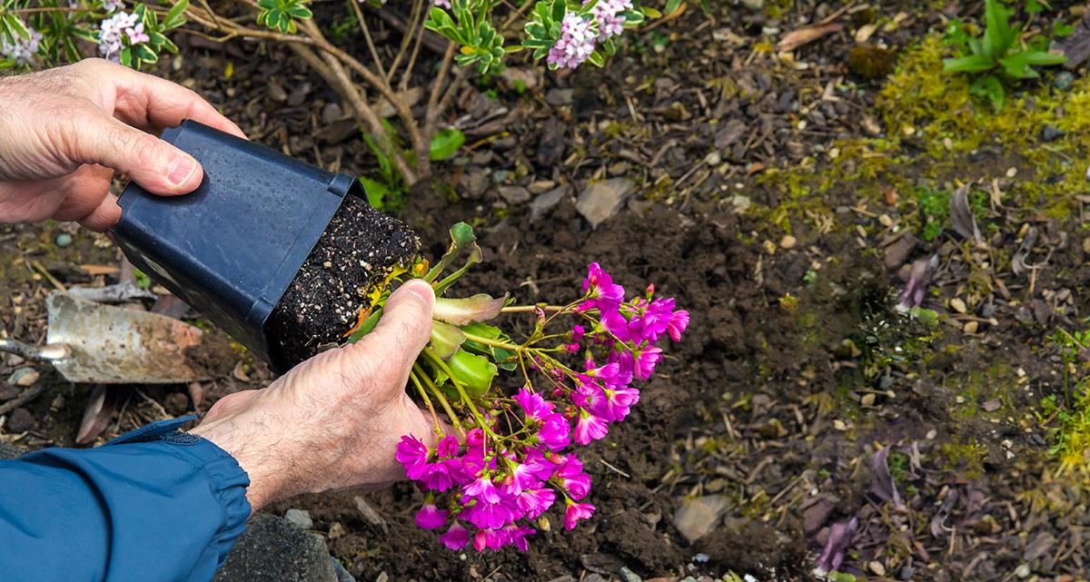 perennials-planting-002-ss-2021.jpg