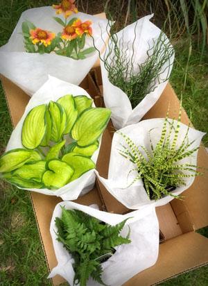 srg-packaging-pics-boxes-pots-sm-3-.jpg