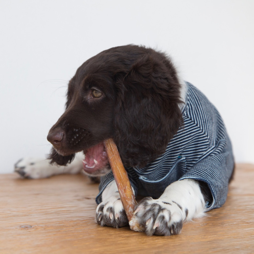 Bully Sticks are a healthy treat for your dog, and offer a variety of health benefits! They are easily digestible, unlike some other chews or treats.