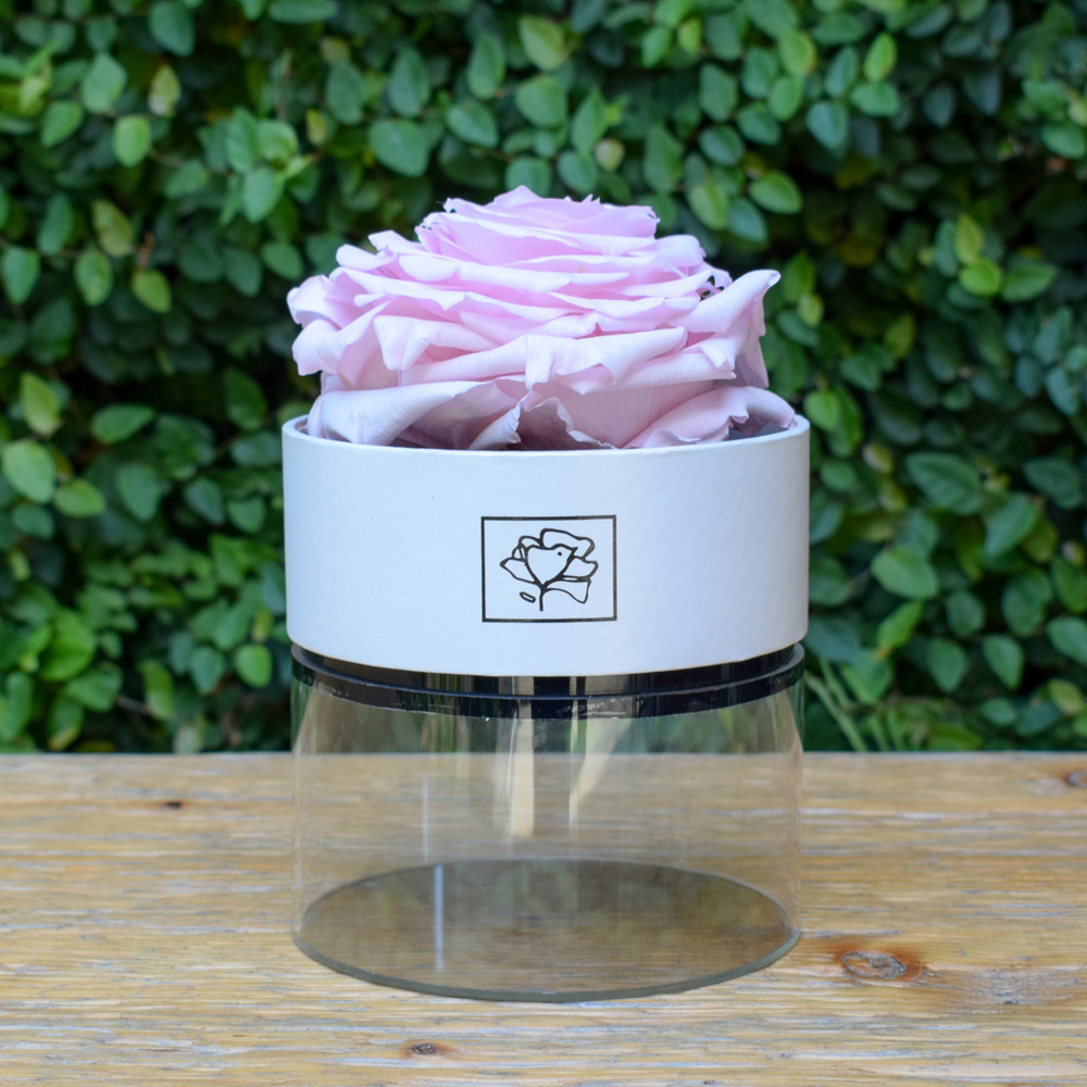 """Light Pink   A perfect pick me up that will continue bringing joy for up to a year. These  roses are preserved in a round white box, with acrylic top and offer lasting perfume and color. Treated with environmental friendly & non toxic products, size appx. 4.72""""."""