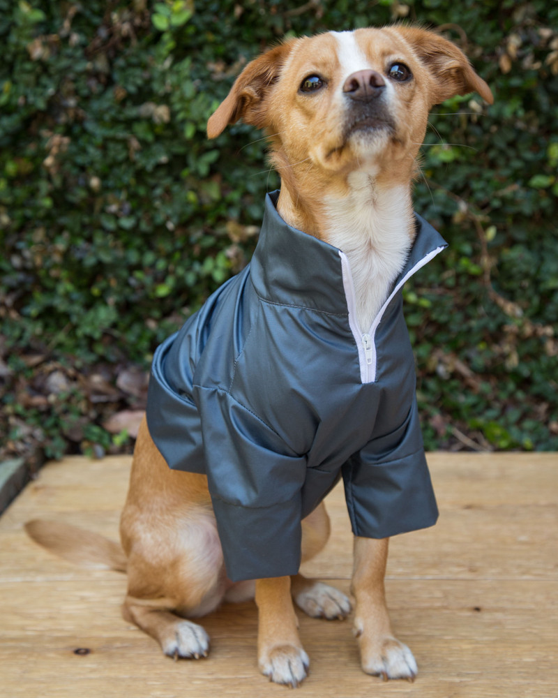 Doggie Windbreaker