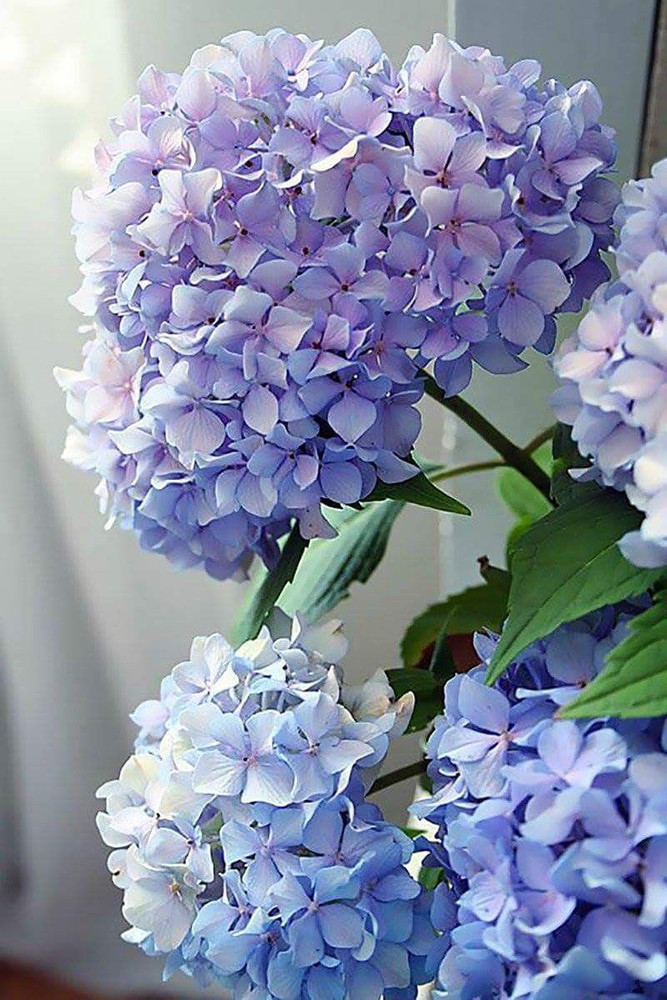 Paint by Numbers - Happily Hydrangea
