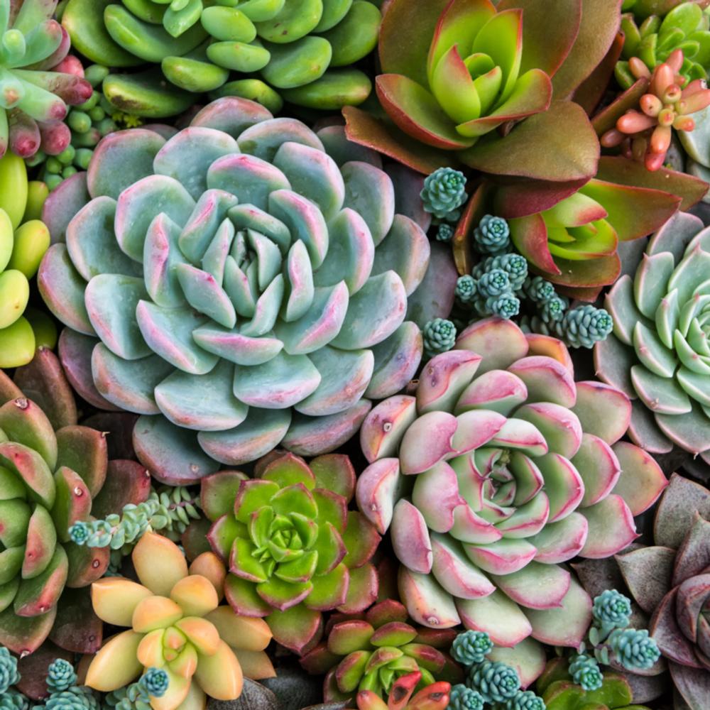 Paint by Numbers - Sensitive Succulents