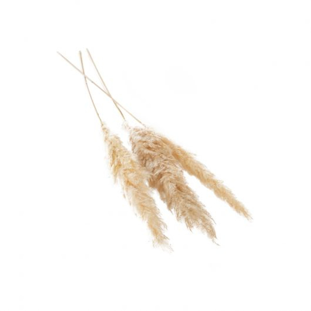 Dried Pampas Grass - Pack of 3