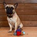 Mini Assorted Felted Pet Balls
