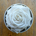 """White   A perfect pick me up that will continue bringing joy for up to a year. These  roses are preserved in a round white box, with acrylic top and offer lasting perfume and color. Treated with environmental friendly & non toxic products, size appx. 4.72""""."""