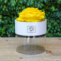 "Yellow   A perfect pick me up that will continue bringing joy for up to a year. These  roses are preserved in a round white box, with acrylic top and offer lasting perfume and color. Treated with environmental friendly & non toxic products, size appx. 4.72""."
