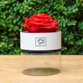 Preserved Rose - Round Box