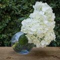"This clear, glass, sphere vase is a unique way to keep your flowers looking exquisite. Dimensions are 5x5""."