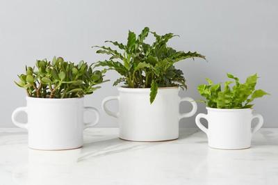 Italian Olive Jar Planter