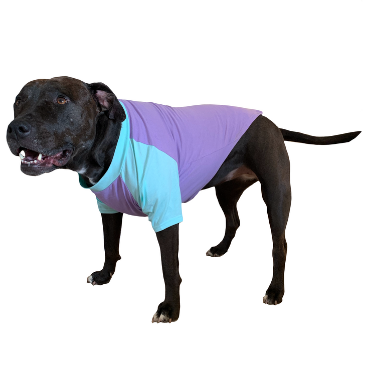 FLIRTY & FARTY Mint & Lavender Dog Raglan