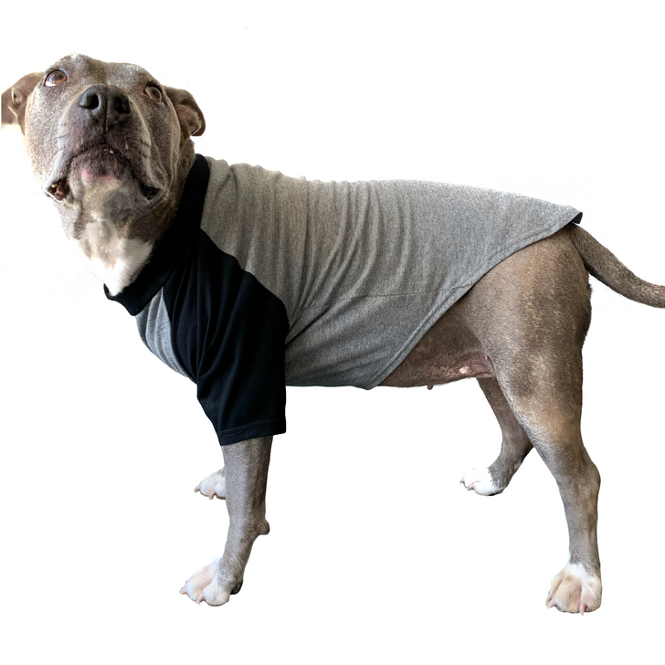 BAD AT SOCIAL DISTANCING Gray & Black Dog Raglan