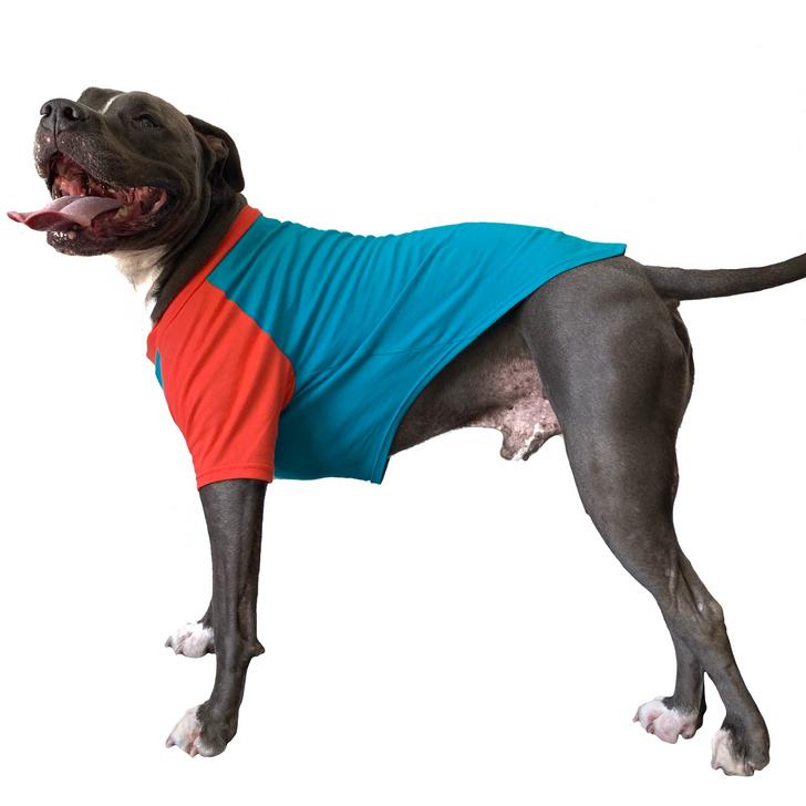 HEY, PET MY BUTT Teal & Coral Dog Raglan