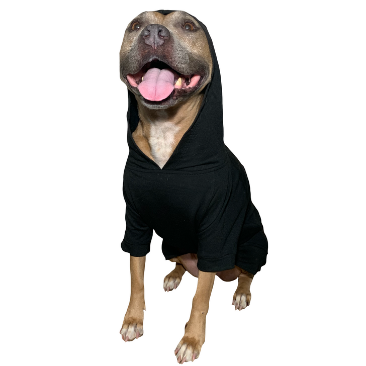 DANG I'M CUTE Black Dog Pull-Over Hoody