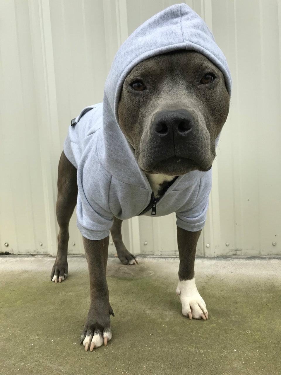 I IDENTIFY AS A HUMAN Dog Zip-Ups