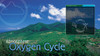 03-PS03-12 Oxygen Cycle